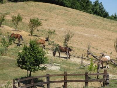 I cavalli in uno dei paddock
